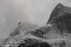 Fugl og fjell - Steffen Voldsund